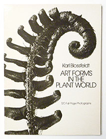 Art Forms in the Plant World | Karl Blossfeldt